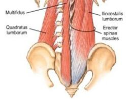 Stabilising Muscles of the Lower Back